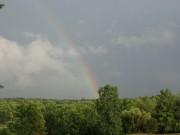rainbow tress summer