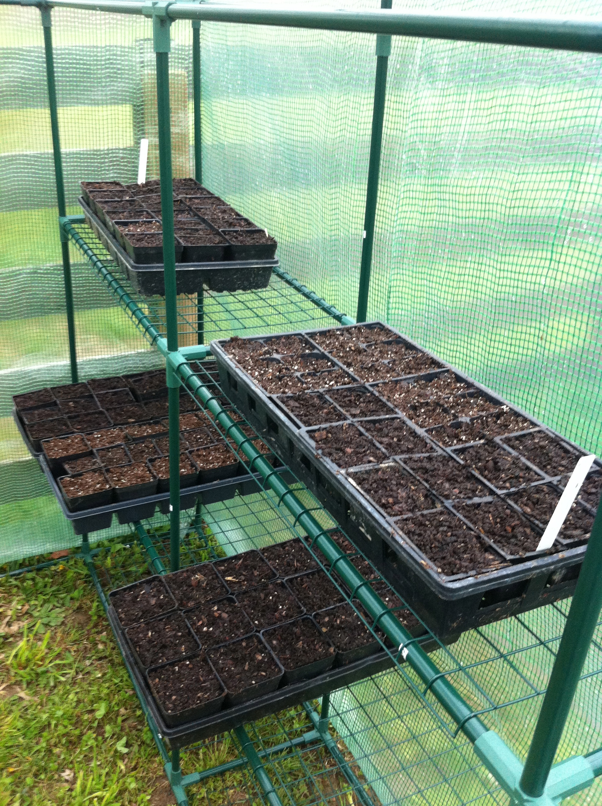 how to start seeds in a greenhouse