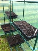 seed trays ingreenhouse