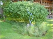 rain garden 5