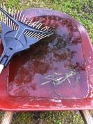 rain water wheelbarrow