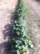 pumpkin patch 2 weeksold