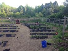 Garden Rows with weed fabric
